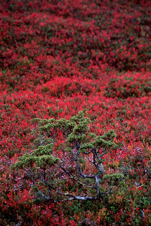 [Finlande] - Les tunturi, montagnes arctiques de Laponie 24868810