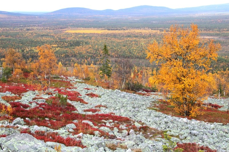 [Finlande] - Les tunturi, montagnes arctiques de Laponie 41504310