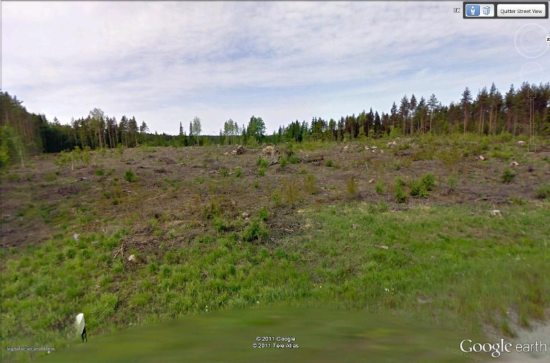 [Finlande] - Gestion de la forêt Forat_10