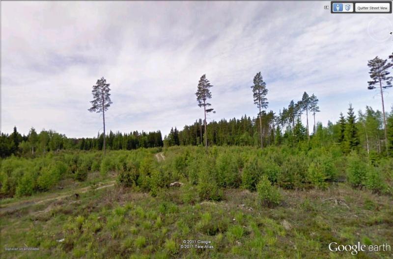 [Finlande] - Gestion de la forêt Forat_11
