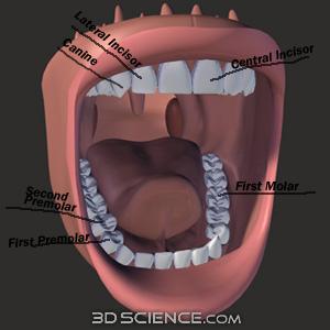 Dentist Badge Mouth10
