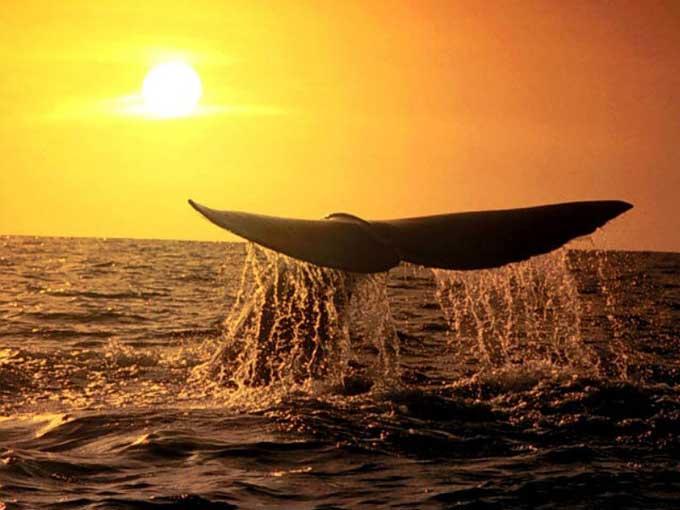 La Baleine Balein15