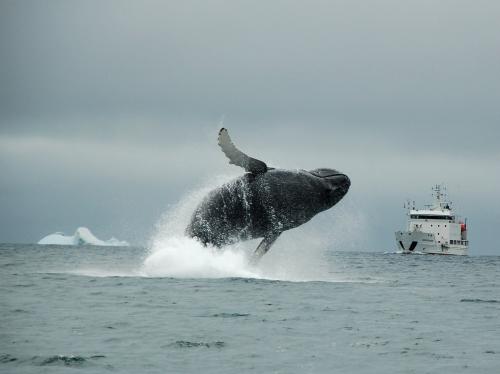 La Baleine Balein17