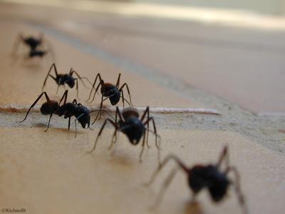 Insectes : plus sociaux que nous ! Dfil_f10