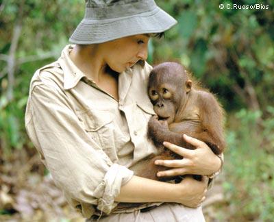Primates en péril !!! Orango11