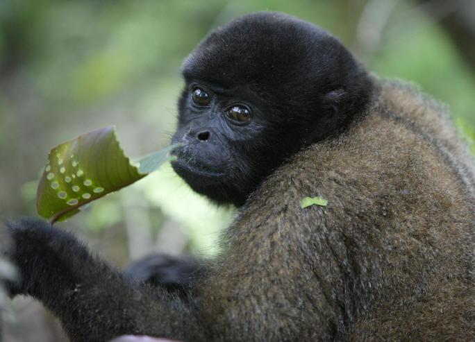 Primates en péril !!! Singel10