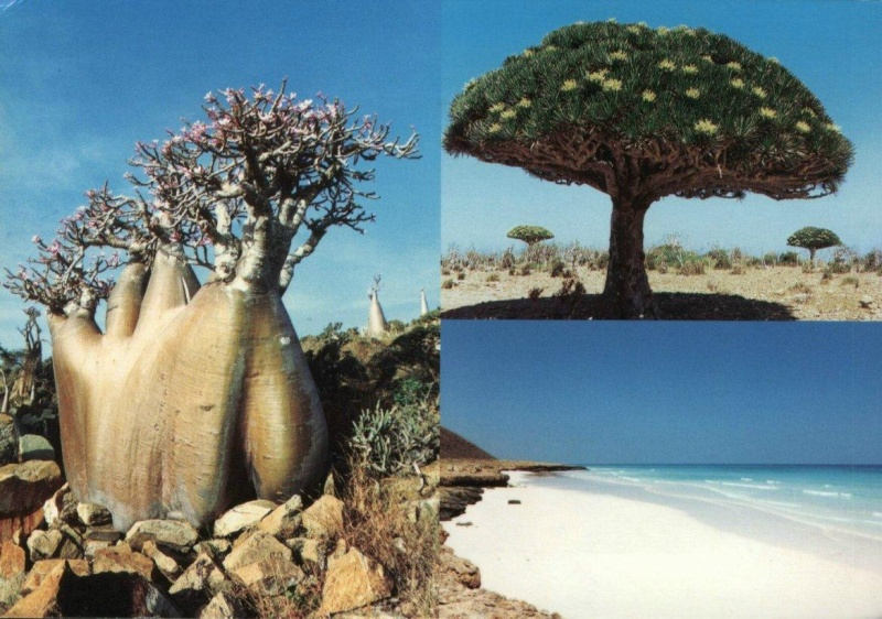 Merveilles de la nature. Socotr10