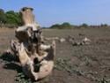 Le cimetière des éléphants Cimeti10