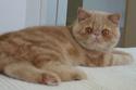Le Top 10 des chats de race en France. Lexoti10
