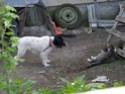 S.O.S pour milou (chien) Milou_10