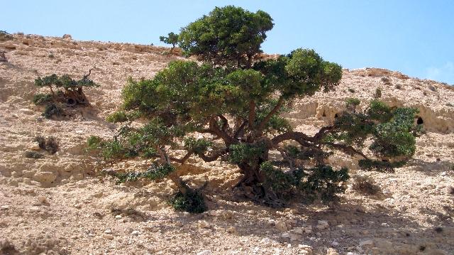 Herborisations marocaines Img_1910