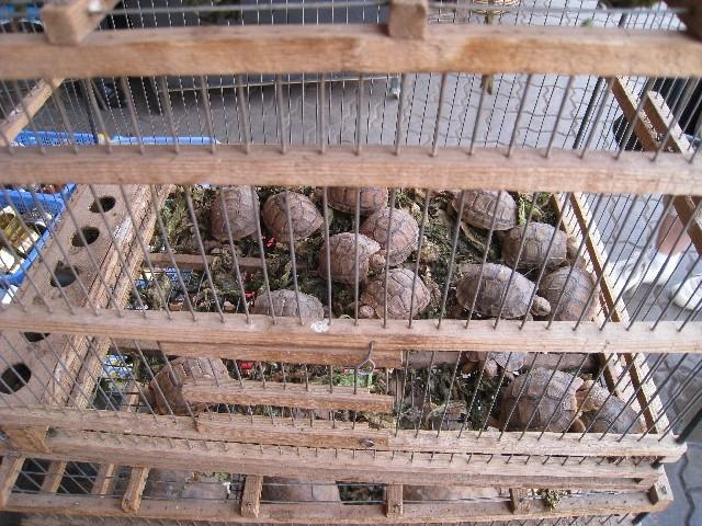 Herborisations marocaines Img_2111