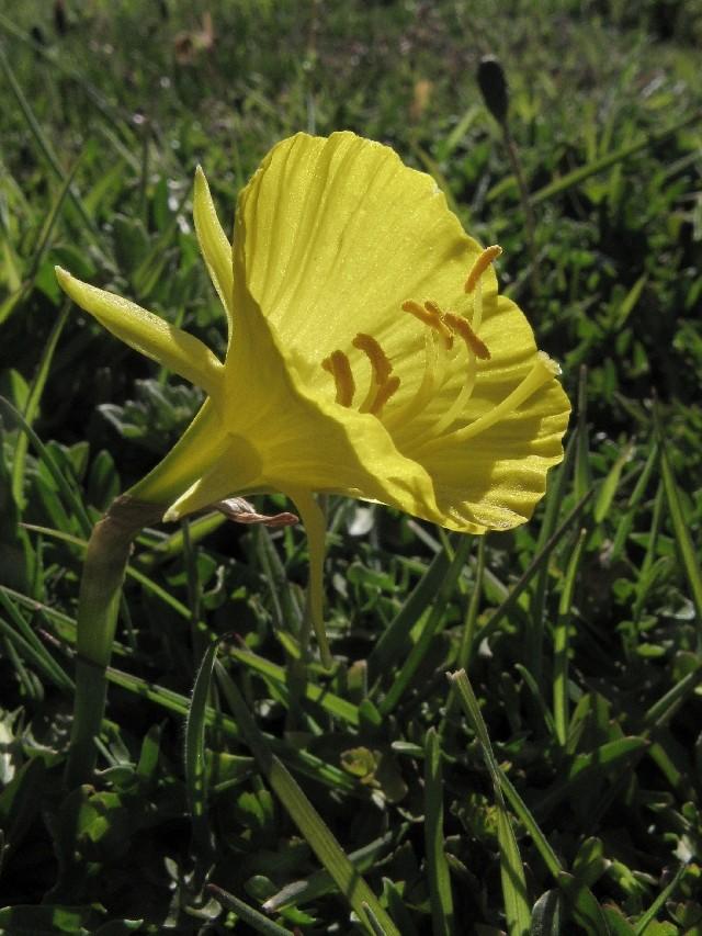 Herborisations marocaines Img_6112