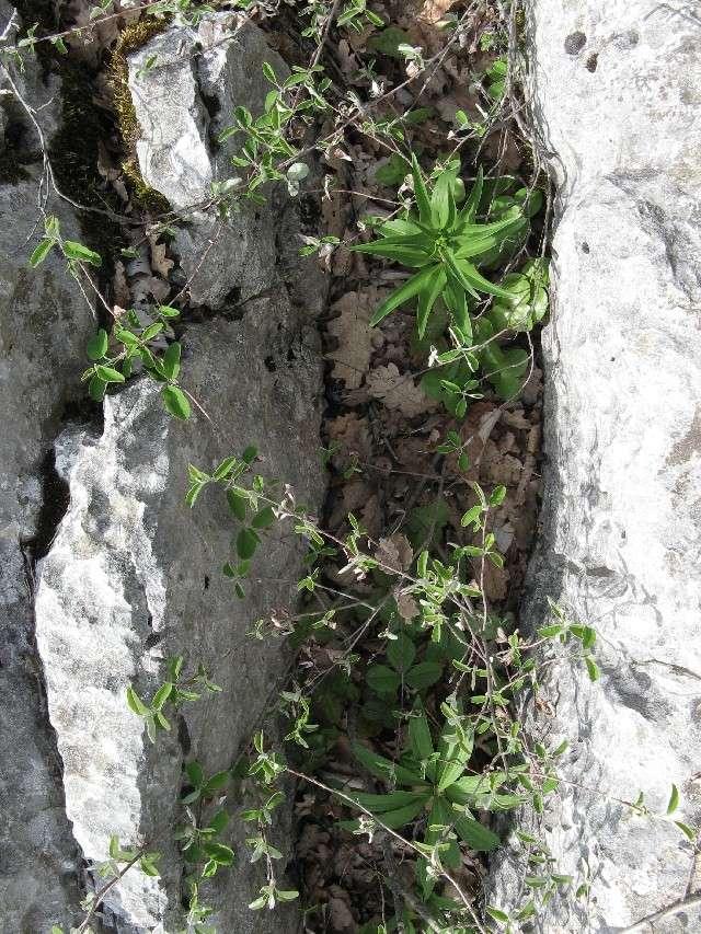 Une journée dans les Alpes maritîmes Img_6513