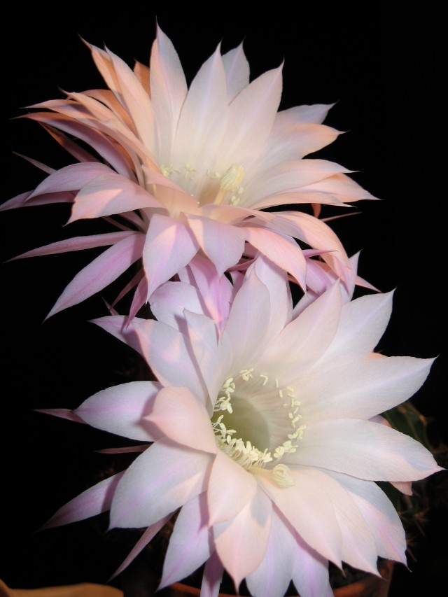 ça pique et ça fait des grosses fleurs : c'est quoi ? Img_6810