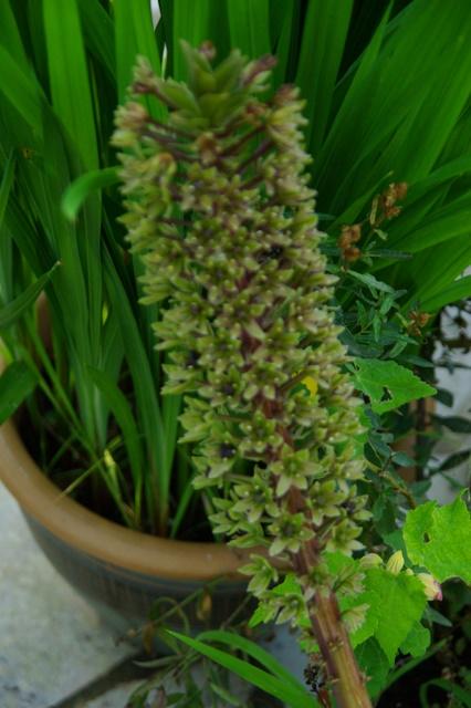Floraisons du mois d'Août Imgp3827