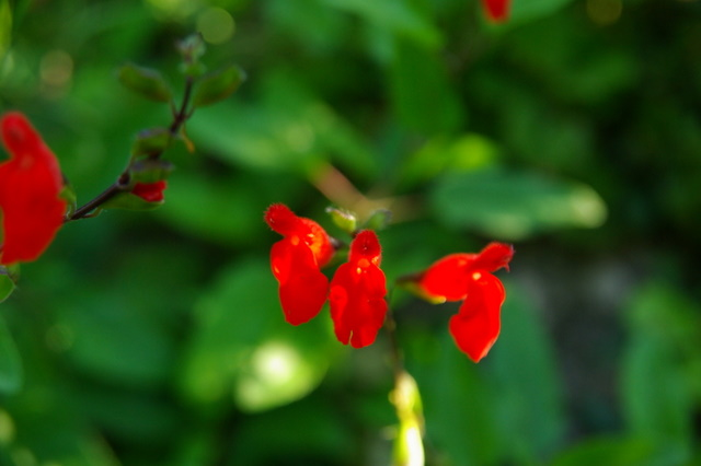 Floraisons du mois d'Août Imgp3918