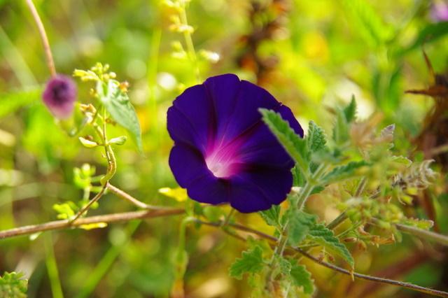 Floraisons du mois de septembre Imgp3956
