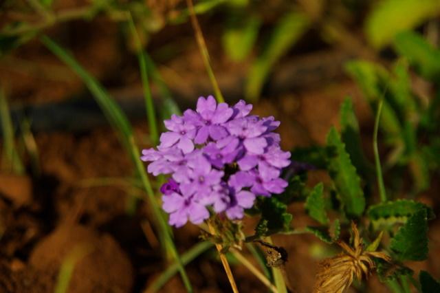 Floraisons du mois de septembre Imgp3957