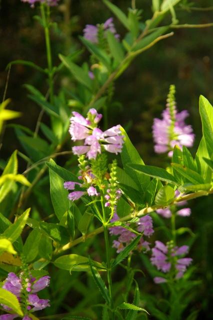 Floraisons du mois de septembre Imgp3959