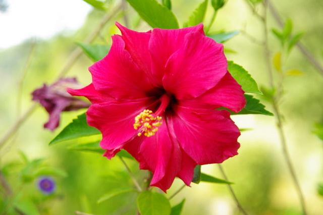 Floraisons du mois de septembre Imgp3962