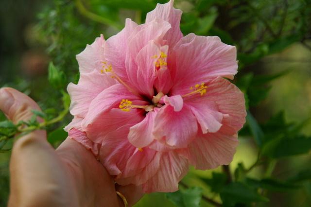 Floraisons du mois de septembre Imgp3963