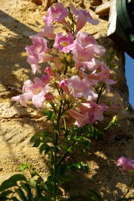 Floraisons du mois de septembre - Page 2 Imgp3976