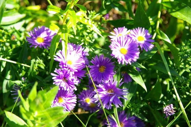 Floraisons du mois de septembre - Page 2 Imgp4012