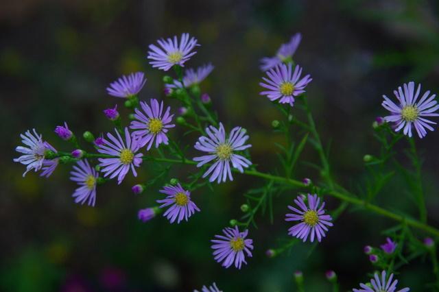 Floraisons du mois de septembre - Page 2 Imgp4013