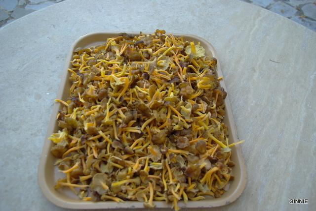 Le monde des champignons... Imgp5122