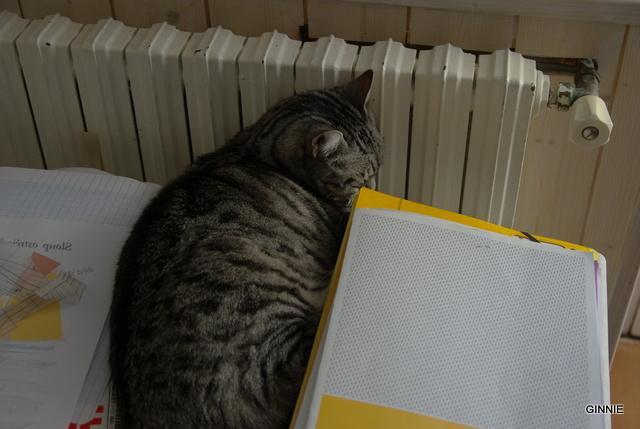 Au royaume des chats Imgp5320