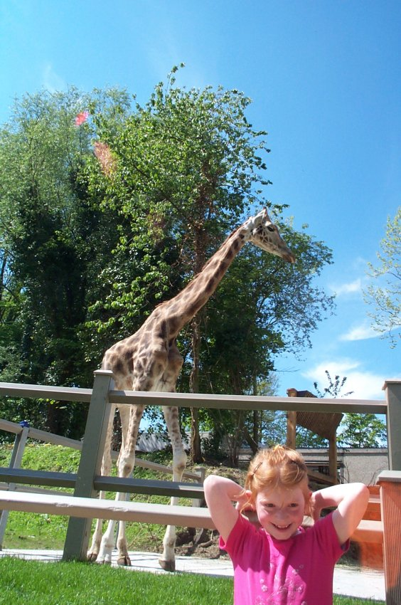 [Belgique] Bellewaerde Park (1954) Girafe10