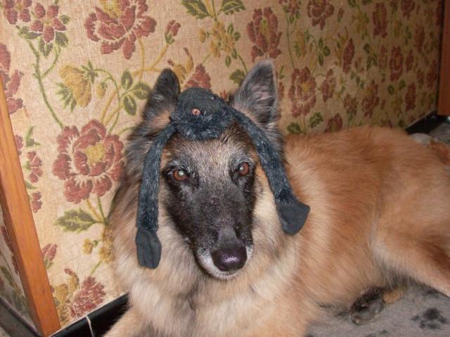 Grimaces de chien 2011_024