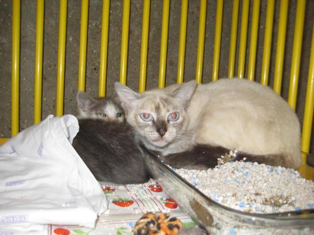 Photos des chats sauvés, avant/après Image_13
