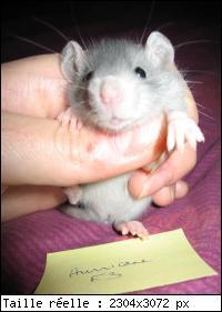 A ma ratounette d'amour Mini_i10