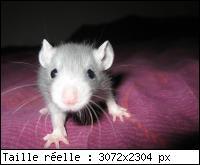 A ma ratounette d'amour Mini_i11
