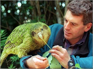 Le kakapo Wide_k10