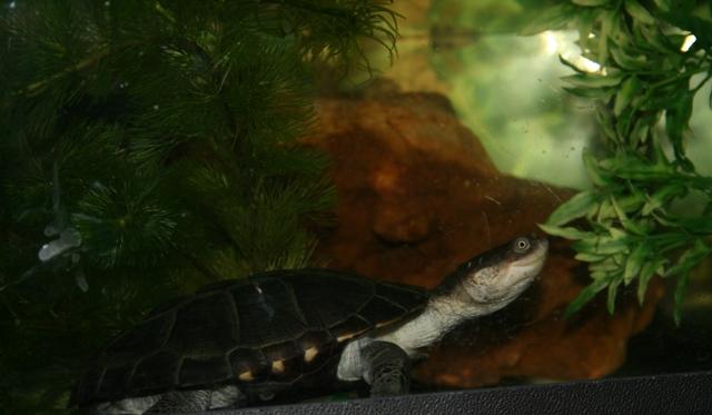 et les tortues alors!!!!! Tortue10