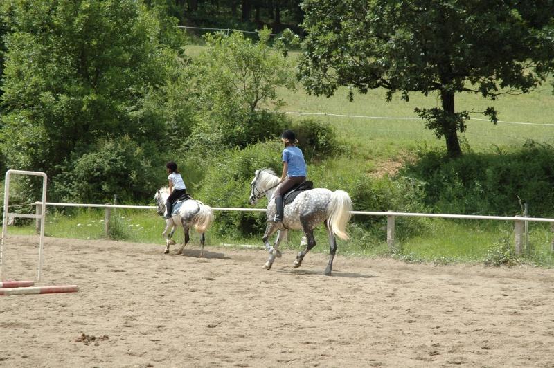 Ce qui est fait avec nos chevaux Dsc_0037