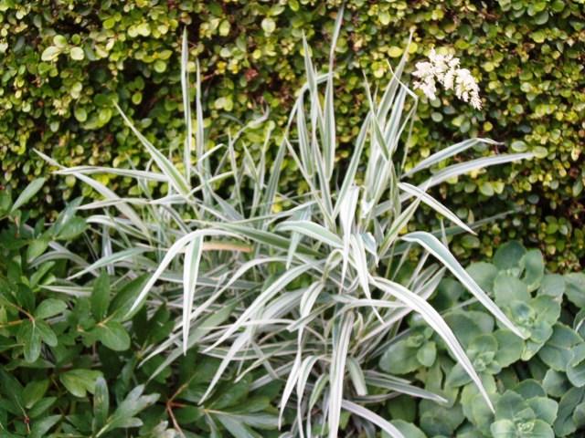 Mauvaise herbe où plante d'ornement. Jardin10