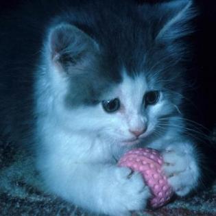 hình ảnh mèo con dễ thương Cat2810