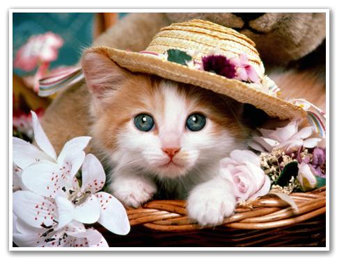 hình ảnh mèo con dễ thương Meo3nh10