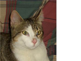S.O.S gato en busca de hogar Manoli11
