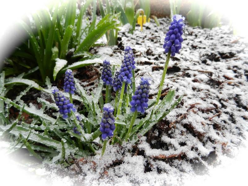 Et vous dites que c'est le printemps ..... ? 15avri11