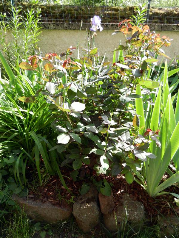 moi aussi mon jardin, il se transforme 30_6_111