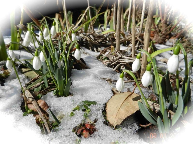 Après la petite chute de neige .... Perce-15