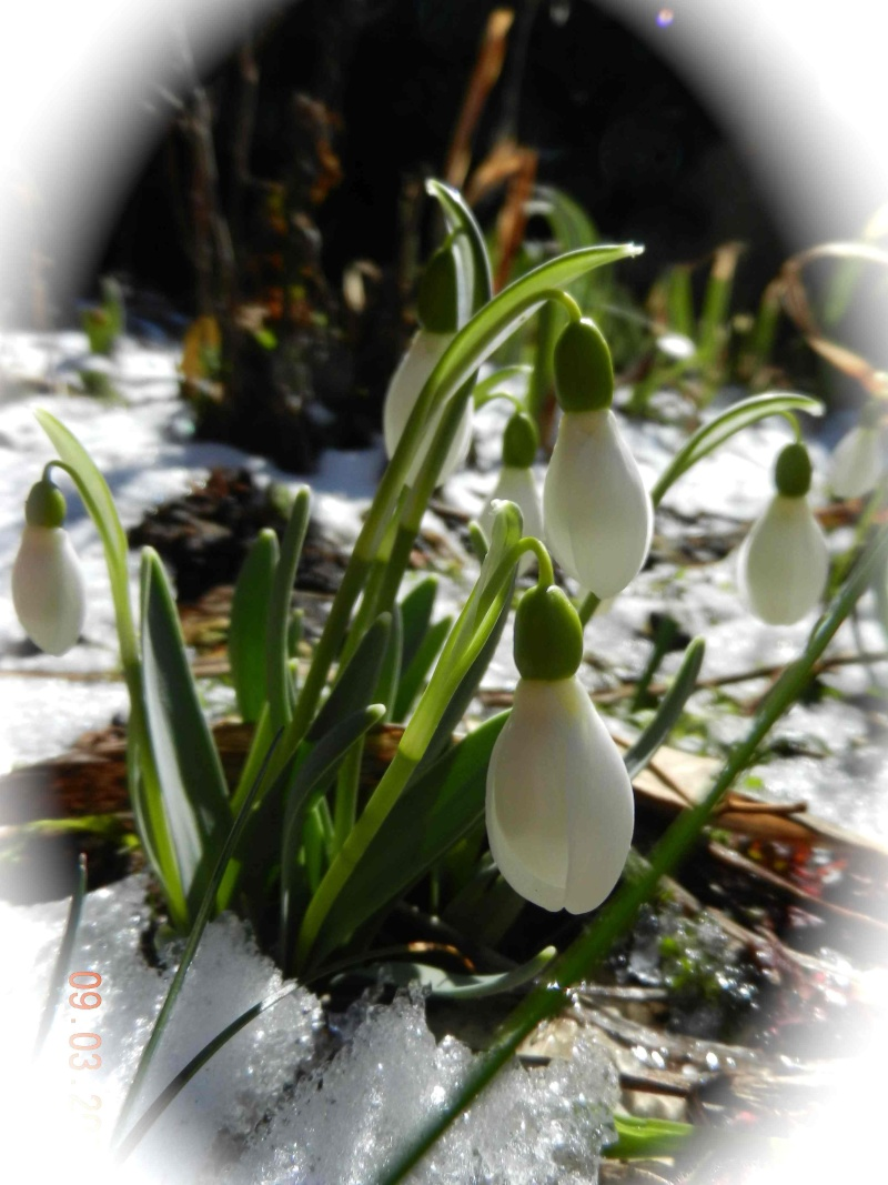 Après la petite chute de neige .... Perce-16