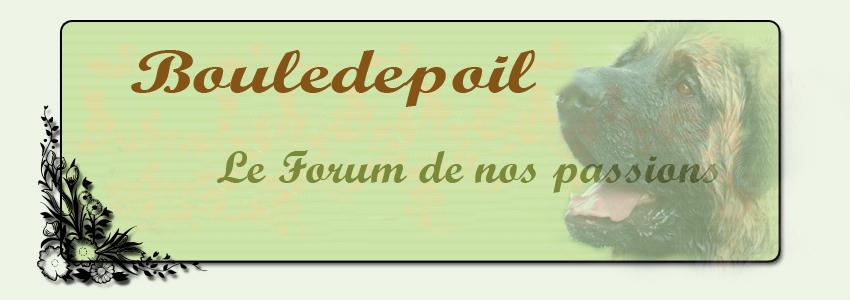 Bouledepoil