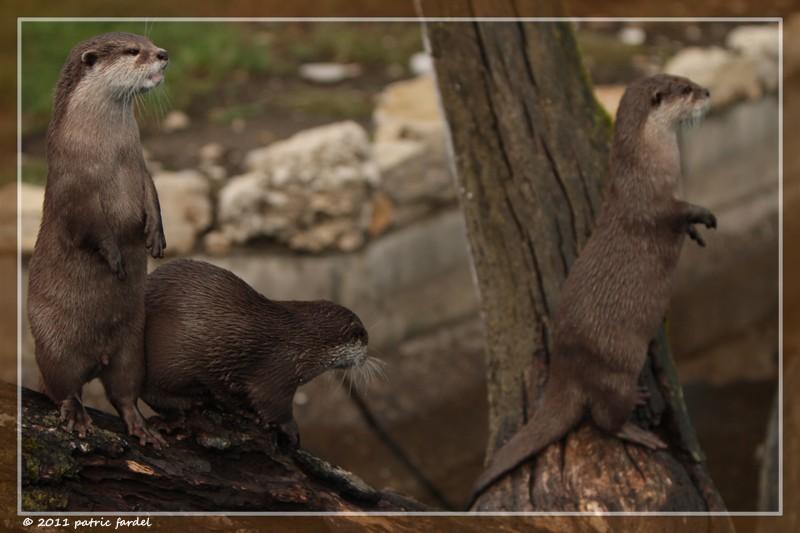 un petit tour au zoo de Studen...en famille. Img_8510