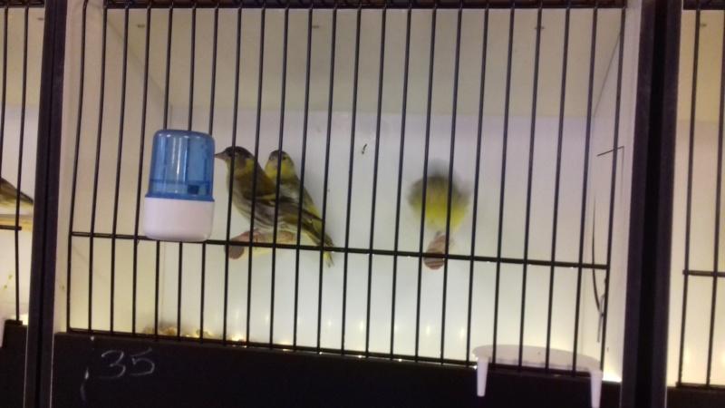 Bourse eurobirds  20181051